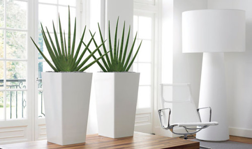 Office Plant White