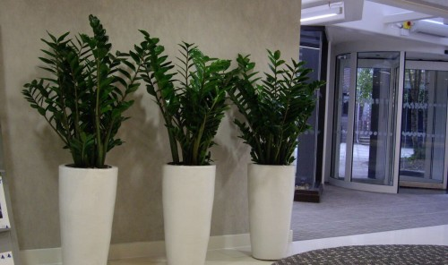 Large Reception Plants