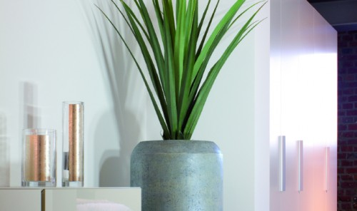 Modern Office Plants